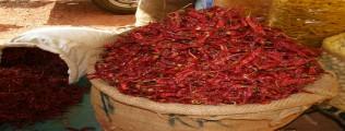 Chilis aus aller Welt