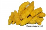 Curcumawurzel