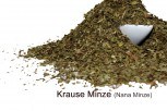 krause Minze- gerebelt - Nanaminze  aus Marokko